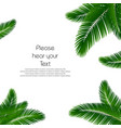 palm leaf background palms leaves for print vector image vector image