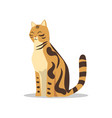purebred brown-spotted bengal cat cartoon vector image vector image