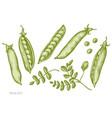 set hand drawn pastel peas vector image