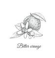 bitter orange bitter orange vector image vector image