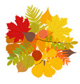 isolated autumn leaves vector image