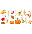 pumpkin and branches vector image vector image