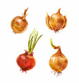 set of watercolor onion vector image vector image