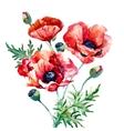 Watercolor poppy composition vector image