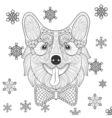Corgi with bow tie in zentangle doodle style vector image