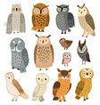 owls set different owls vector image