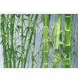 bamboo and rain vector image