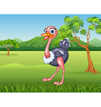 Cartoon ostrich in the jungle vector image vector image