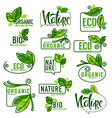 large collection of doodle eco bio nature and vector image vector image