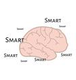 Smart brain vector image vector image