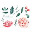 rose watercolor flower decoration elements vector image