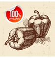 Hand drawn sketch vegetable peppers Eco food vector image vector image