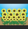 sunflower garden vector image vector image