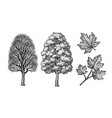 winter and summer maple trees vector image vector image