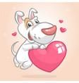 cartoon cute bull-terier puppy holding a heart vector image vector image