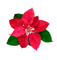 christmas star hand drawn poinsettia flower vector image vector image