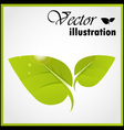 Green leaf isolated on white vector image vector image