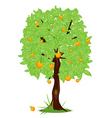 orange tree vector image vector image