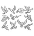 pigeon flying with olive branch sketch vector image vector image