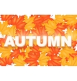 Red and Yellow Autumn Leaves Pattern vector image