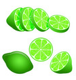 set of green lime slices isolated on white vector image