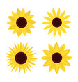sunflower set four yellow sun flower icon cute vector image