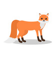 bafox with tail down on white background vector image vector image