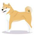 shiba inu dog vector image vector image