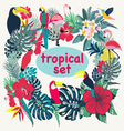 tropical birds palm leaves and flowers vector image
