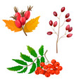 high quality autumn set vector image vector image