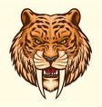 sabretooth head mascot angry vector image vector image
