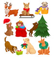 set of dogs with christmas elements home pets vector image