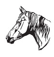 decorative portrait of horse-2 vector image vector image