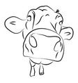 cow head sketch on white background vector image vector image