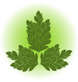 image of a green plant vector image