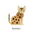 purebred bengal cat cartoon domestic animal with vector image vector image