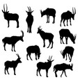 set of antelopes vector image vector image