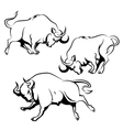 Fighting Bull Set vector image