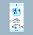 hand drawn bream or bass seafood banner set vector image