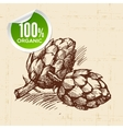 Hand drawn sketch vegetable artichoke Eco food vector image vector image