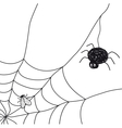 Spider with a fly in a web on white background vector image