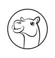 camel face vector image vector image