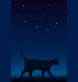 cat walks on grass late at night vector image vector image