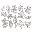 hand drawn forest leaves autumn leaf sketch vector image vector image