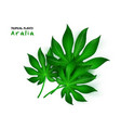 isolated realistic tropical vector image vector image