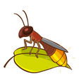 little firefly on green leaf on white background vector image