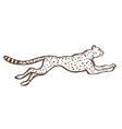 cheetah running sketch vector image