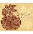 pomegranate background vector image vector image