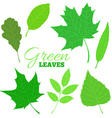 Set of veined green leaves isolated on white