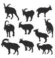 set of rams vector image